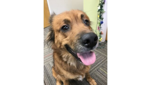 Meet Fiona! Our Pet of the Week